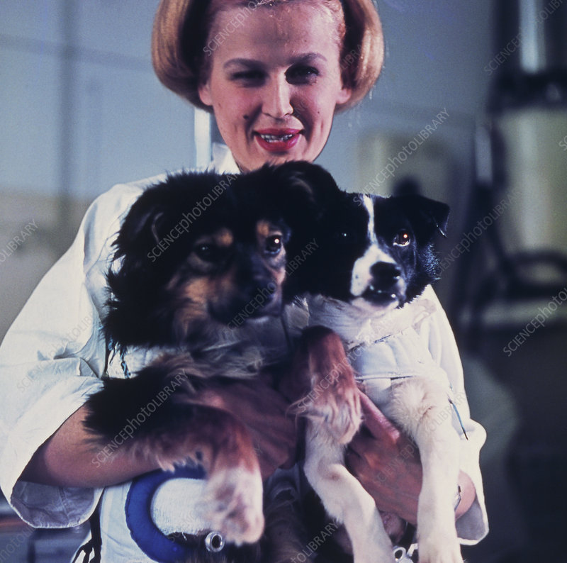 Technician holding two Soviet space dogs
