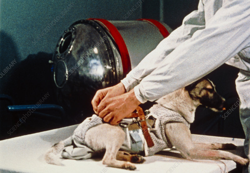 First animal in space: Laika the Soviet space dog.