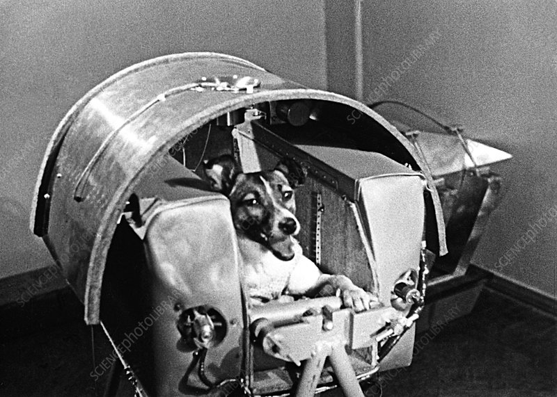 Laika The Space Dog Stock Image S620 0021 Science