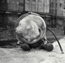 Belka, Soviet space dog, in a spacesuit