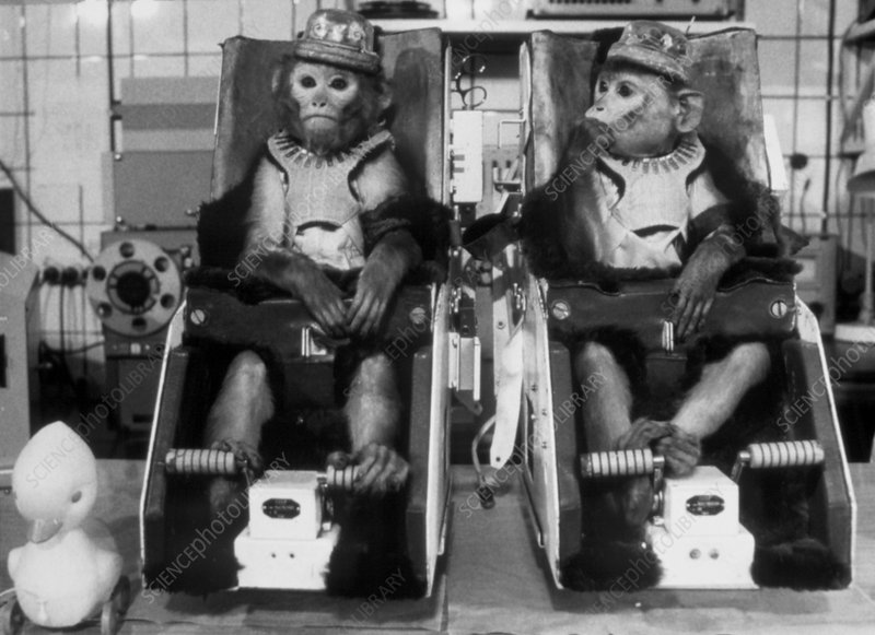Monkeys used in Soviet space research