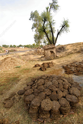 Cow dung cakes, Rajasthan