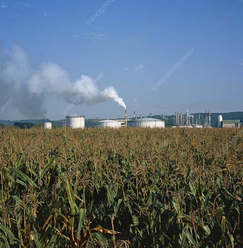 Maize field and bioethanol refinery