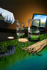 Biofuel research, ethanol from crops