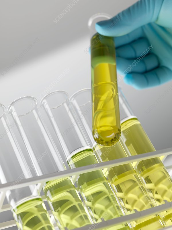 research papers on biofuels from algae Biofuel is defined as solid, liquid, or gas fuel derived from recently dead biological material the difference between our petroleum and biofuel is that.