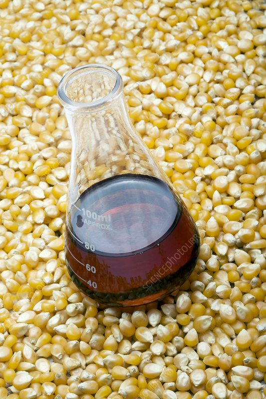 Using maize to produce biofuels