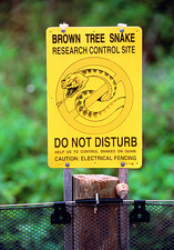 Warning sign: Brown tree snake site, Guam Island