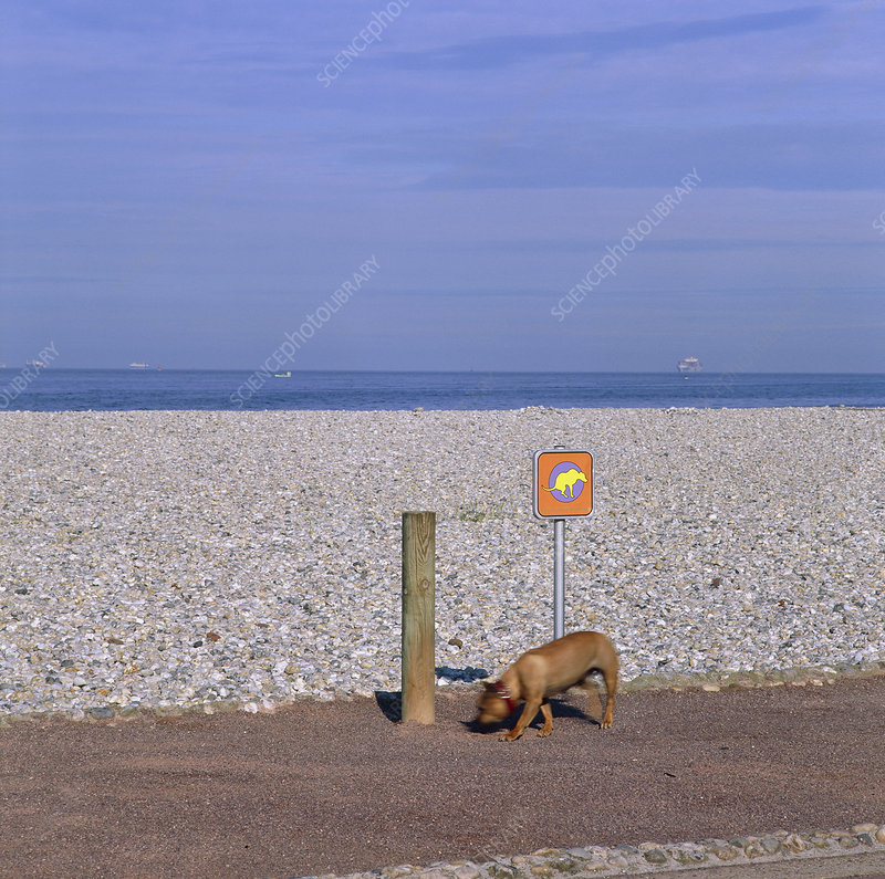 Dog no-fouling sign