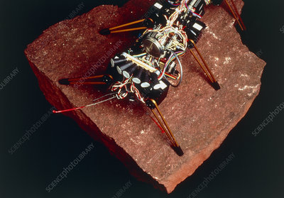 Robot insect 'Genghis', MIT