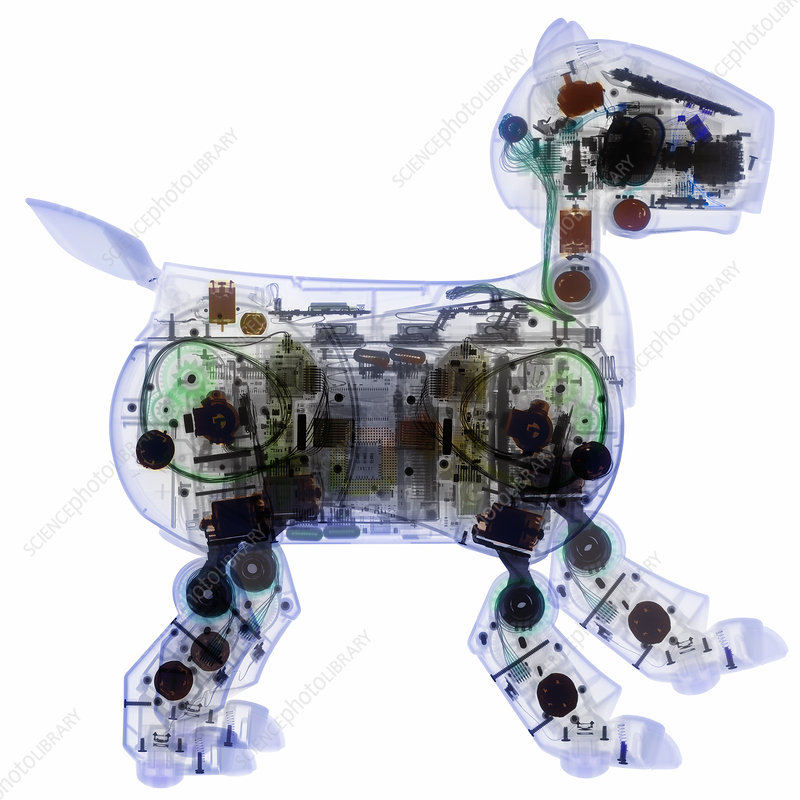 AIBO robot dog, X-ray