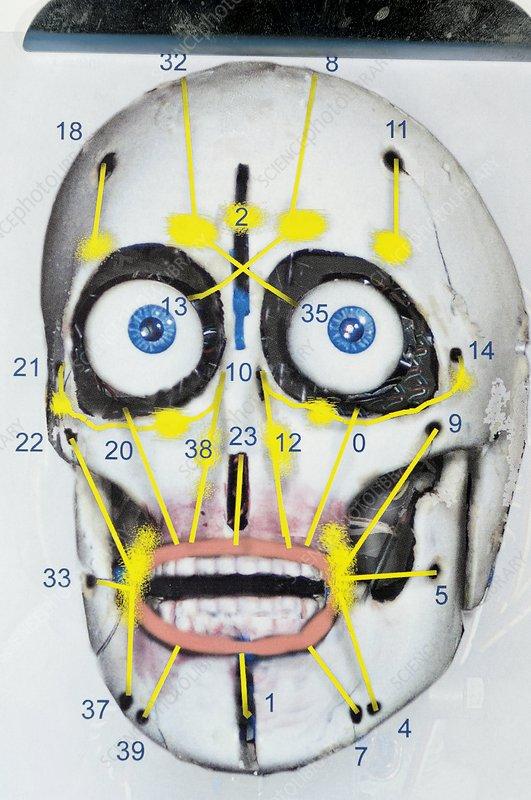 Humanoid Robot Skull - Stock Image T280  0246