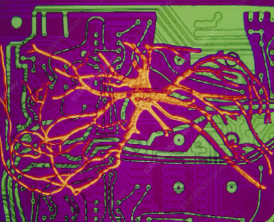 Neural network: artwork of nerve cell on chip