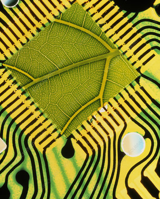 Computer art of a leaf in an integrated circuit