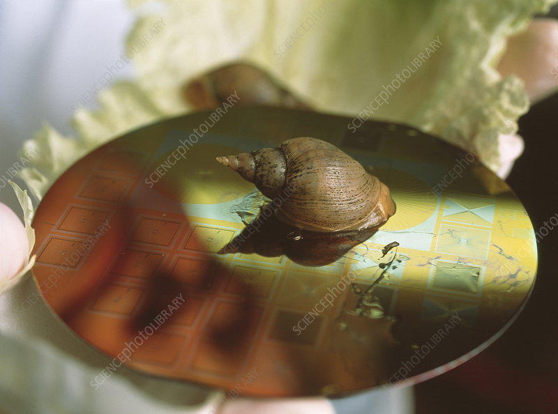 Snail on silicon chips