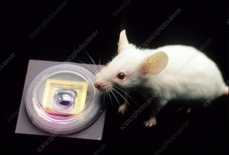 Mouse and neurochip