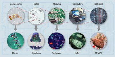 Electronic and biologic systems, artwork