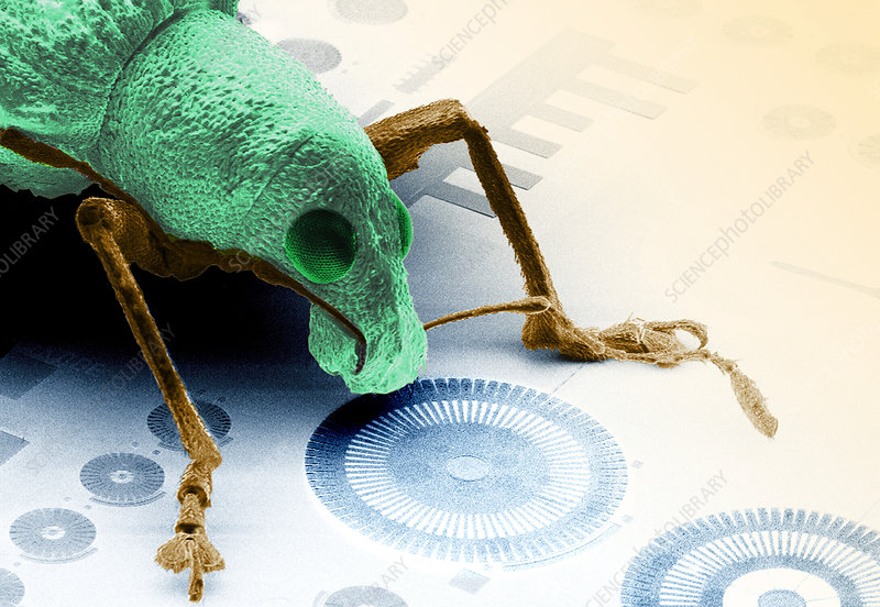 Weevil and MEMS device, SEM