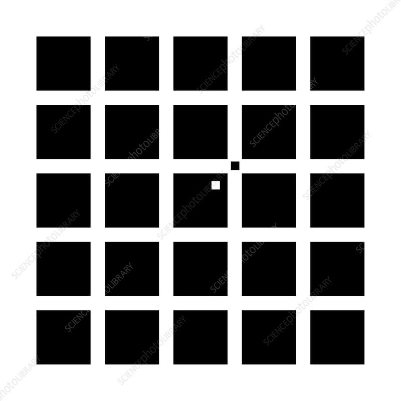 Hermann-Hering illusion