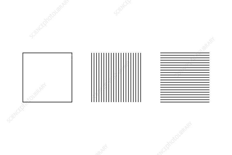 Square illusion - subdivision