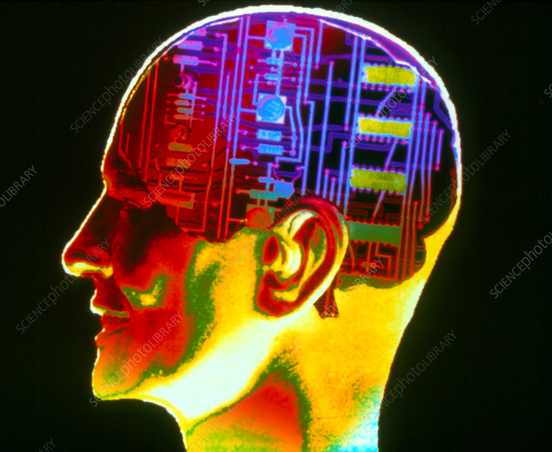 Side view of a head containing a circuit board