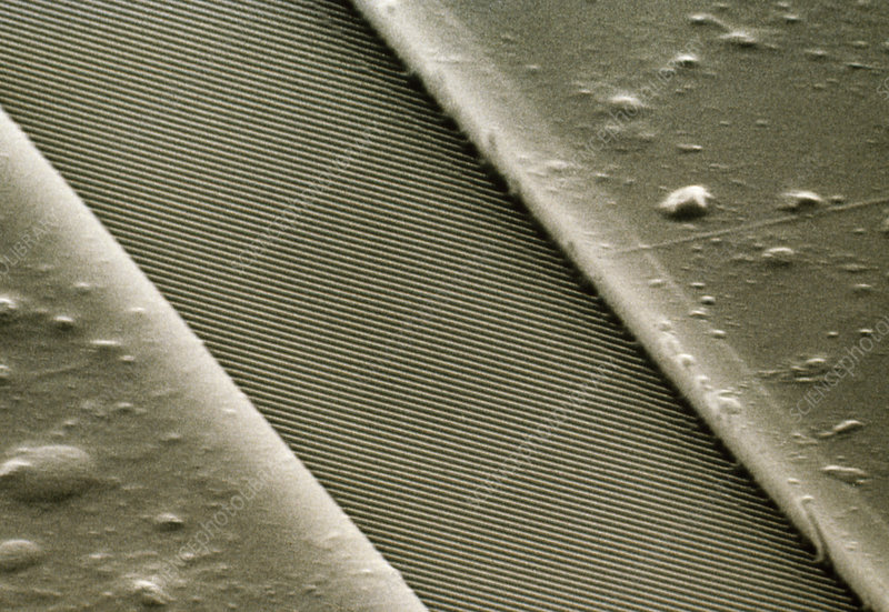 SEM of compact disc musical layer