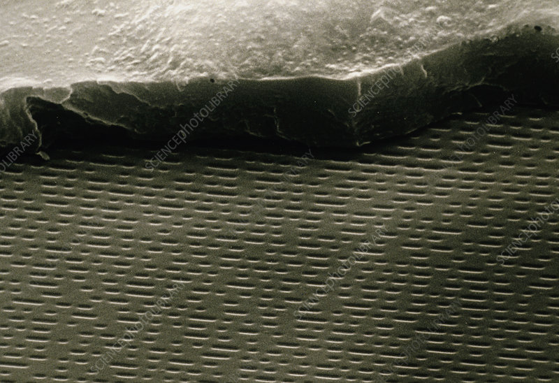 SEM of cracked CD showing musical layer