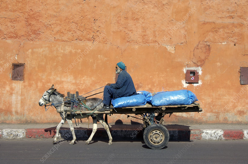 Donkey and cart transportation