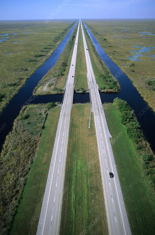 'Alligator Alley, Florida'