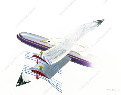 Artwork showing how a wing works