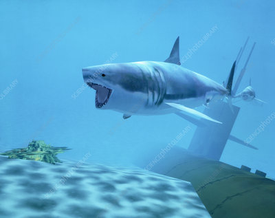 Example of Reality Centre graphics, shark