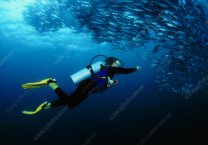 Diver and trevally