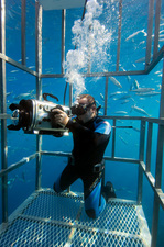 Diver filming from a shark cage