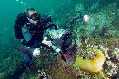 Diver filming an anemone
