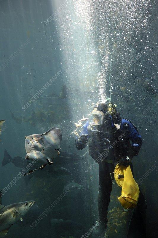 Scuba diver feeding fish