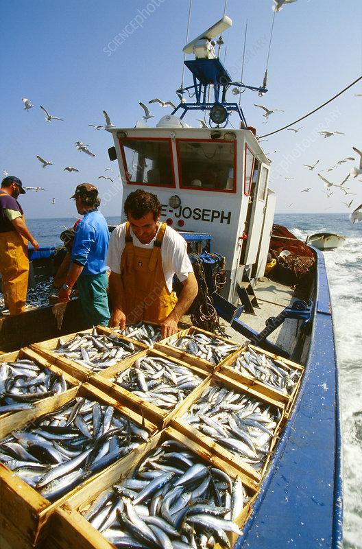 Mediterranean Fishing