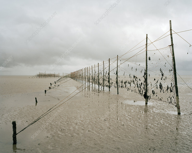 Salmon nets, Scotland