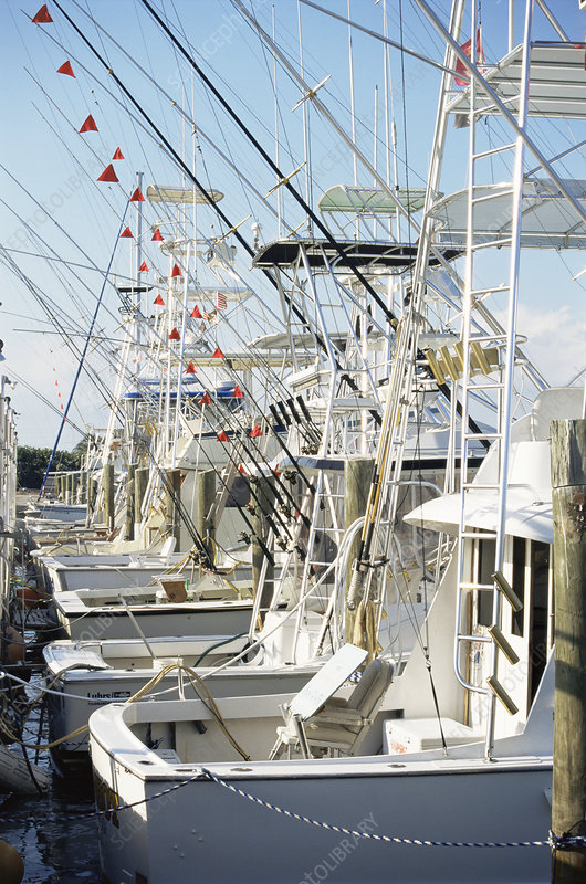 Charter fishing boats, Florida, USA