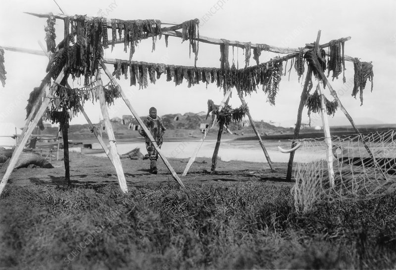 Drying whale meat, Alaska, 1929