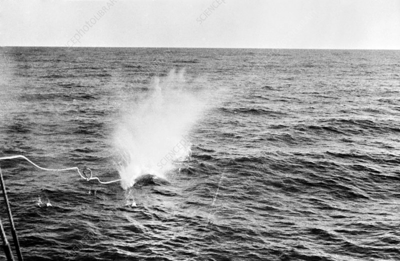 Whale harpoon exploding, mid-20th century