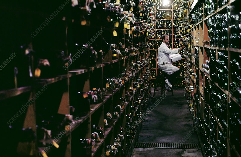 Man checking samples in Californian wine cellar