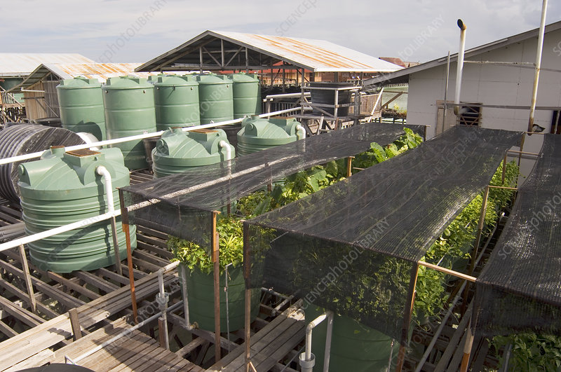 Hydroponic waste management system