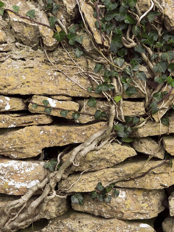 Dry stone wall