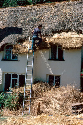 'Roof thatcher, England'