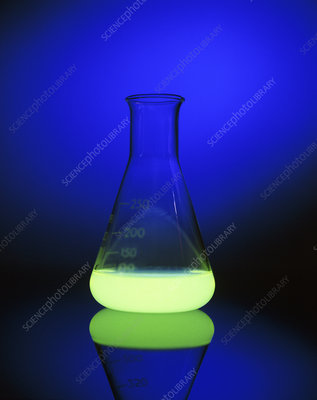 Bioluminescence seen in a laboratory flask