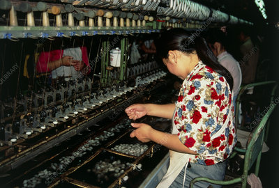 Workers in a silk factory, China