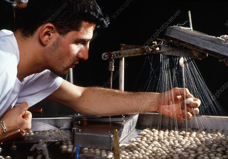 Textile worker with silk moth cocoons for weaving