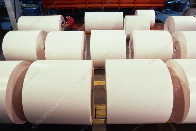 Rolls of paper at mill