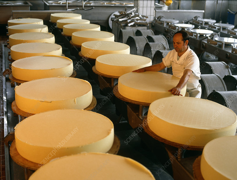 Worker in production hall with pressed, raw cheese