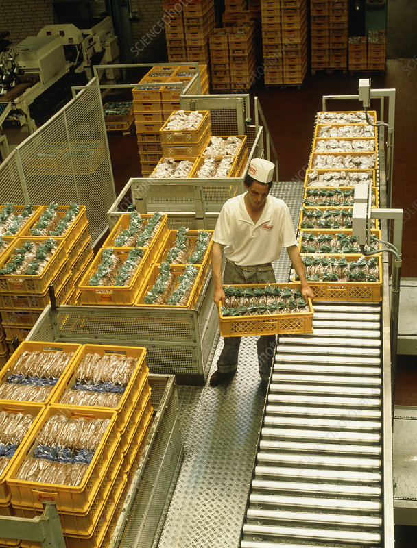 Man delivering bread to a bakery warehouse