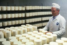 Worker turning maturing, circular, soft cheeses